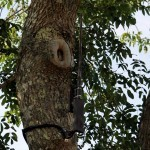 """Keeping the cable trunking away from view down the back of this tree involved abseiling over the river to secure it... """"Who say's it can't be done?!"""""""