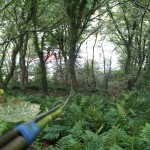 The original cable strung between the trees